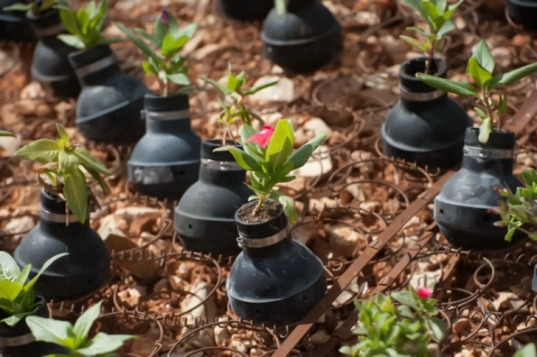 Flowers planted in used tear gas grenades form a memorial garden on the spot where, in a 2009 demonstration in the West Bank village of Bil'in, Bassem Abu Rahme was shot and killed with a high-velocity tear gas grenade fired by Israeli soldiers, Bil'in, West Bank, October 4, 2013. The grenades are left over from clashes between Israeli soldiers and Palestinians during the weekly protest in Bil'in.